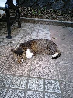 神戸の猫です(´∀`)